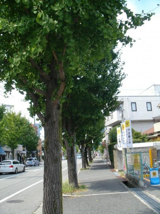 夙川散策5 (14)