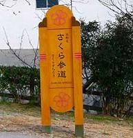 sakura-road